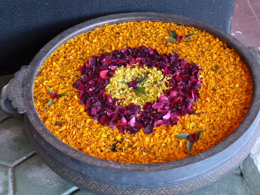 Yogaview: Flower Petals